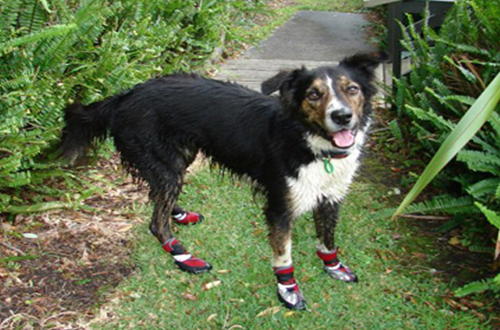 Shoes for dogs