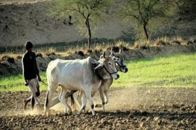 Purchase of Agricultural Land in India by NRIs - Foreigners