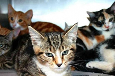 Australian woman locks 14 cats in house until they ate each other!