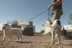 Authorities of Arizona Health Warn Residents about Rise in Animal Rabies Cases
