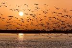 Indian birds, Indian birds, india witnesses alarming decline in the bird habitat, Trends