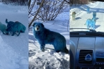 Bright Blue Stray dogs found in Russia