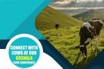 AZ Event, AZ Event, connect with azgoshala cows, Shobana