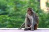 How to Survive A Monkey Attack - Handle It Without Panicking!