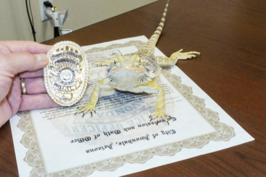 Lizard promoted as Police officer in Arizona