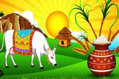 Makara Sankaranthi Pongal Celebrations - Special Gho Puja