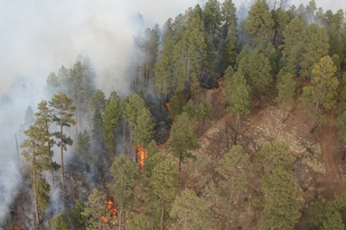 Rattlesnake Fire Burns 11,000 Acres Overnight Spreading Across Eastern Arizona