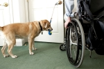 New Arizona Regulation Claims To Eliminate Fake Service Animals