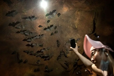A sensational video of scientists of Wuhan CDC collecting samples in bat caves