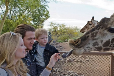 Zoo in Phoenix Gets Creative Keeping Its Critters Cool