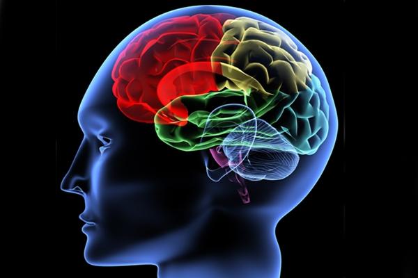 Brain: Use it or lose it