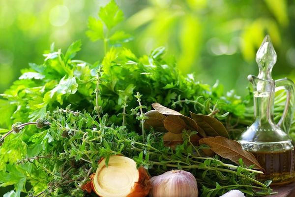 7 Herbs that helps for better immune system},{7 Herbs that helps for better immune system